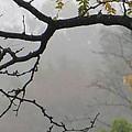 Wednesday Mist by Sonali Gangane