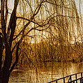 Weeping Willow And Bridge by Barbara Middleton