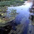 Wekiwa River Reflections by Christy Usilton