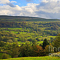 Wensleydale Near Westholme Bank In The Yorkshire Dales by Louise Heusinkveld