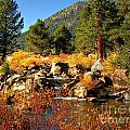 West Fork Of The Carson River Fall Colors by Scott McGuire