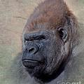 Western Lowland Gorilla by Betty LaRue