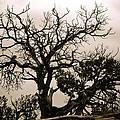 Western Winter Tree by Marilyn Hunt