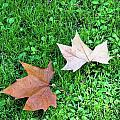 Wet Leaves On Grass by Lorraine Devon Wilke