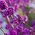 Wet Purple by Mike Reid