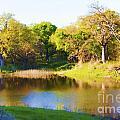 Wetland Serenity by Diana Cox