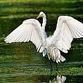 Wetlands Angel by Bill Dodsworth