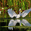 Wetlands by Bill Dodsworth