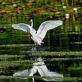 Wetlands Reflection by Bill Dodsworth