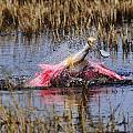 Wetlands Splash by Bill Dodsworth