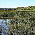 Wetlands by Susan Herber