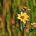 Wetlands Wildflowers by Bill Dodsworth