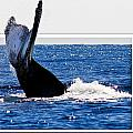 Whale Tail by Jean Noren