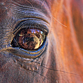 What Are You Looking At? by Mariola Bitner