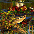 What Lurks On The Swamp by Barbara Bowen