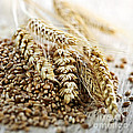 Wheat Ears And Grain by Elena Elisseeva