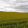 Wheat Field Homestead by Steve McKinzie