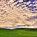 Wheat Field In The Palouse by David Patterson