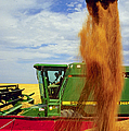 Wheat Harvest by Photo Researchers
