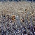 Wheat by Art Dingo