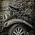Wheels And Roots  by The Artist Project