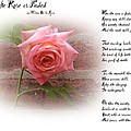 When The Rose Is Faded by Bill Cannon