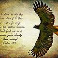 Where Eagles Soar by Blair Wainman