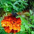 Whirl Wings Butterfly by Debra     Vatalaro