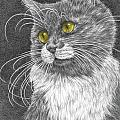 Whiskers - Color Tinted Art Print by Kelli Swan