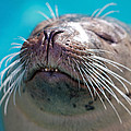 Whiskers Of A Seal by Karol Livote
