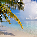 Whispering Palm On The Tropical Beach by Jenny Rainbow