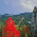 Whistler Red by Lynn Bauer