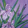 White And Mauve   Irises by Iris Devadason