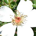 White Autumn Floral Macro by P S