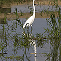 White Bird At June Lake by Robert Selin