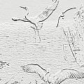 White Birds by Francesa Miller