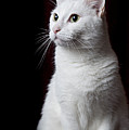 White Cat by Photo by Dee Dee Yelverton