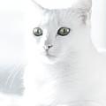 White Cat by Vilhjalmur Ingi Vilhjalmsson