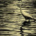 White Crane by Roger Wedegis