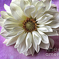 White Dahlia On Polka Dots by Ruby Hummersmith