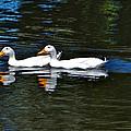 White Ducks At Sterne Park by Stephen  Johnson