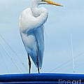 White Egret by Tammy Chesney