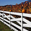 White Fence With Pumpkins by Garry Gay