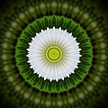 White Flower 2 by Linda Hutchins