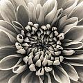 White Flower by Dawn OConnor