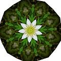 White Flower by Linda Hutchins