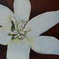 White Flower by Lugenia Dixon