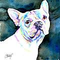 White French Bulldog by Christy Freeman Stark