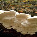 White Fungus by Renate Nadi Wesley
