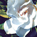 White Gardenia by Elaine Plesser